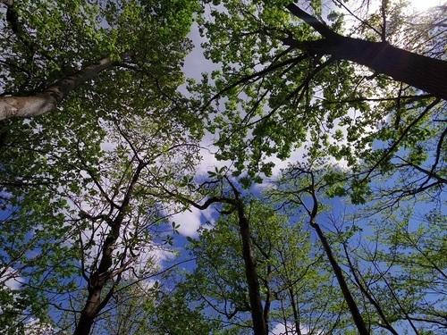 ハンモックから見える空.jpg